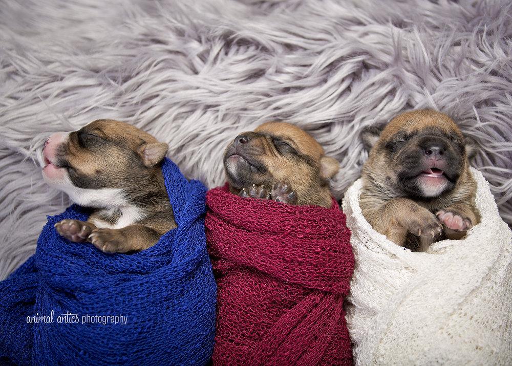 Rosie Pups 001 WEB.jpg