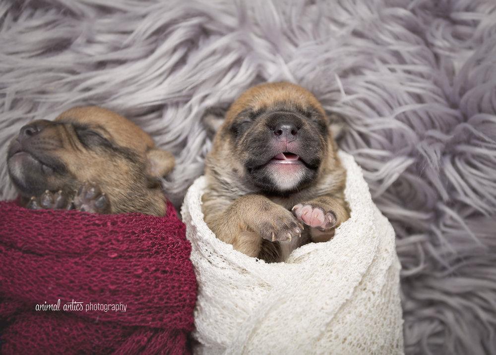 Rosie Pups 003 WEB.jpg