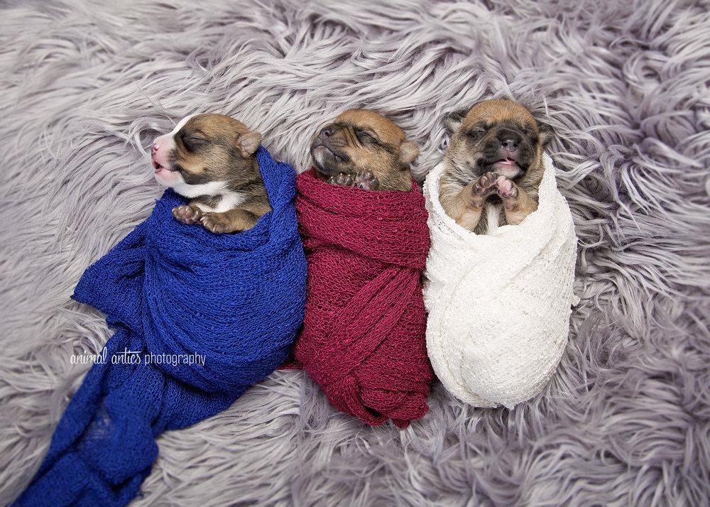 Rosie Pups 004 WEB.jpg