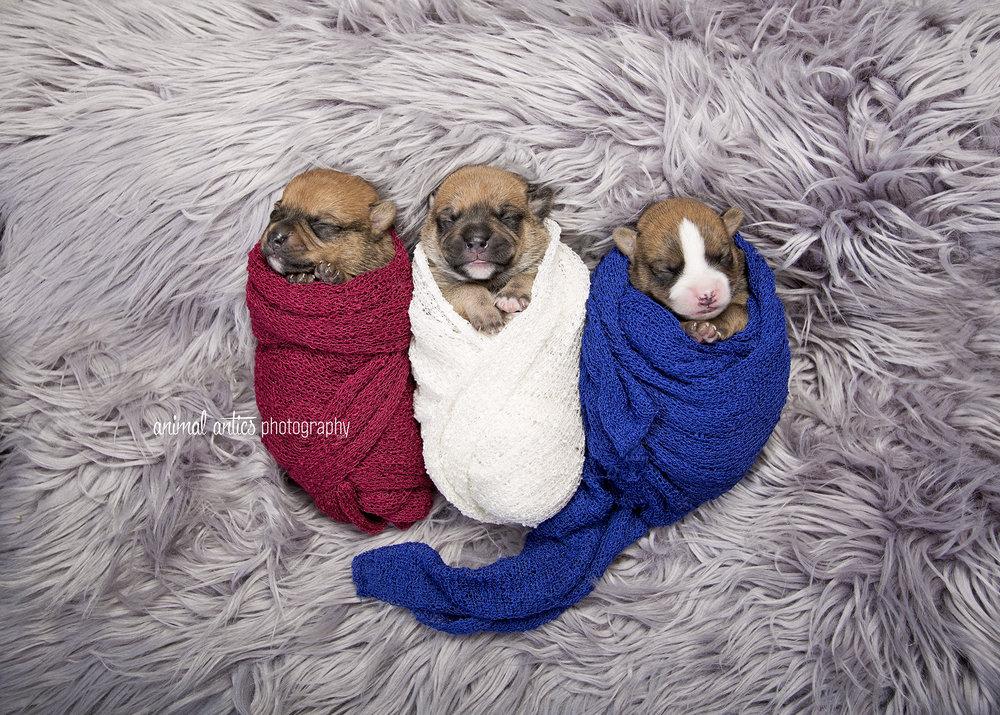Rosie Pups 005 WEB.jpg