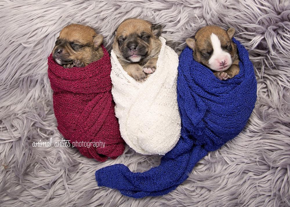Rosie Pups 006 WEB.jpg