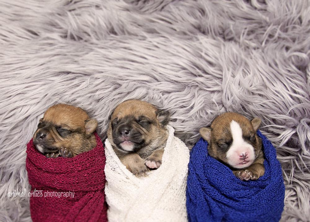Rosie Pups 007 WEB.jpg