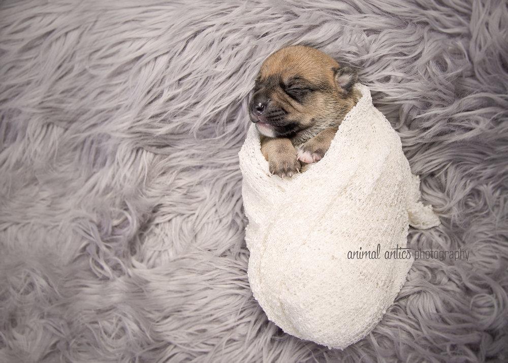 Rosie Pups 008 WEB.jpg