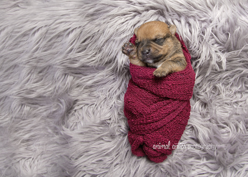 Rosie Pups 009 WEB.jpg
