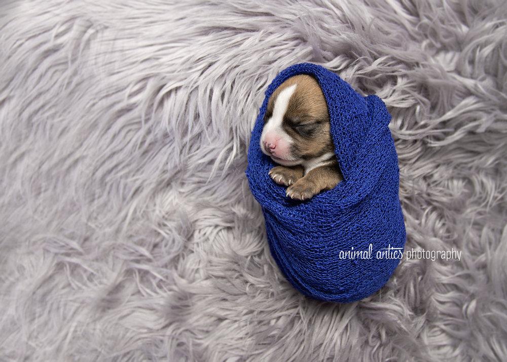 Rosie Pups 010 WEB.jpg