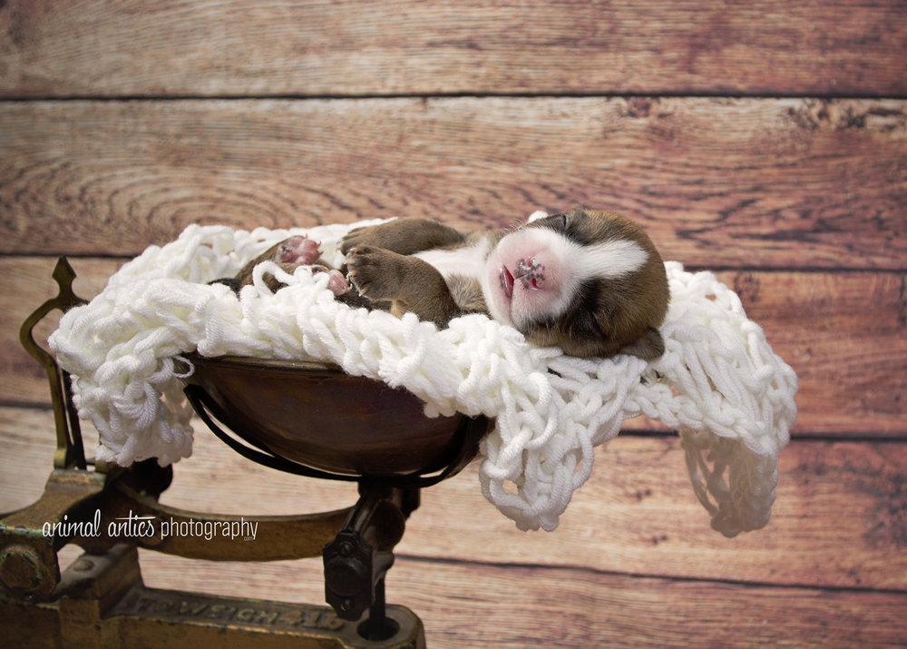 Rosie Pups 012 WEB.jpg
