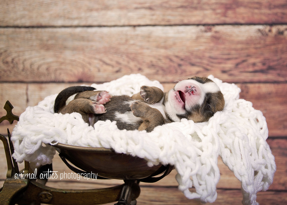 Rosie Pups 015 WEB.jpg
