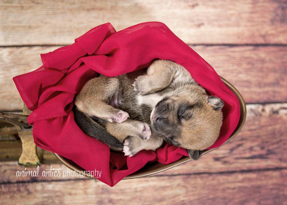 Rosie Pups 016 WEB.jpg