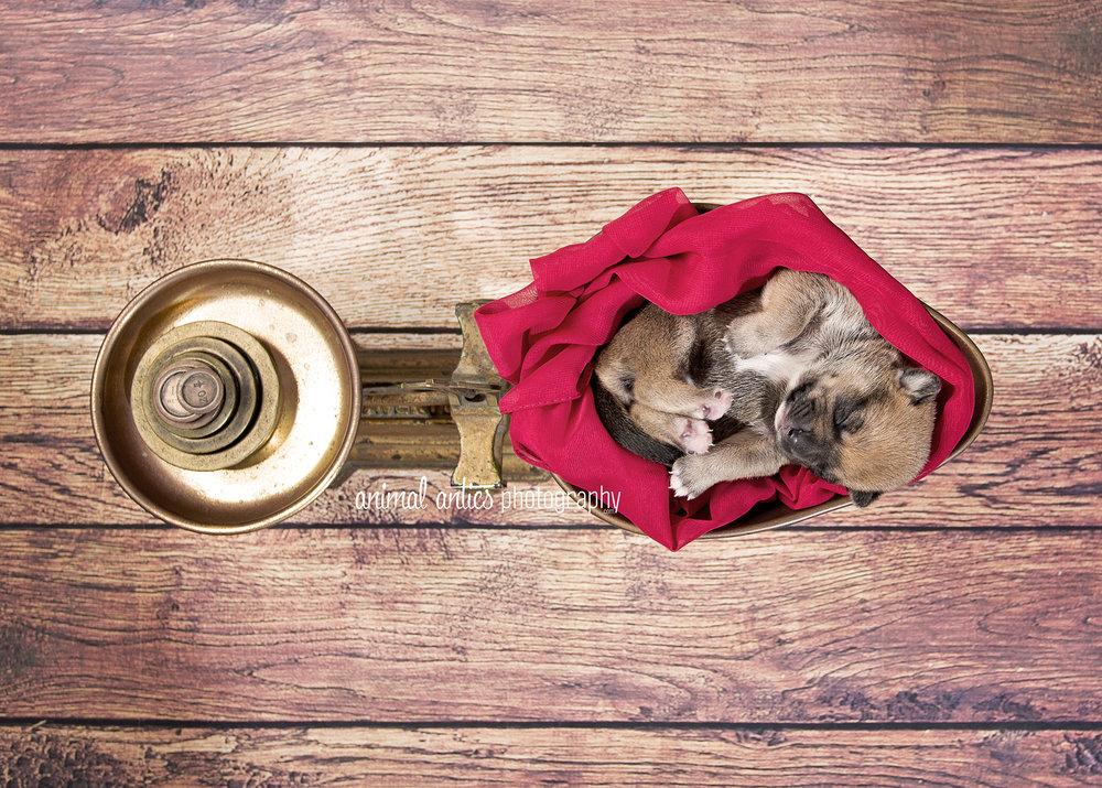 Rosie Pups 017 WEB.jpg