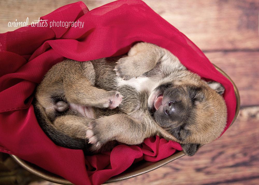 Rosie Pups 018 WEB.jpg