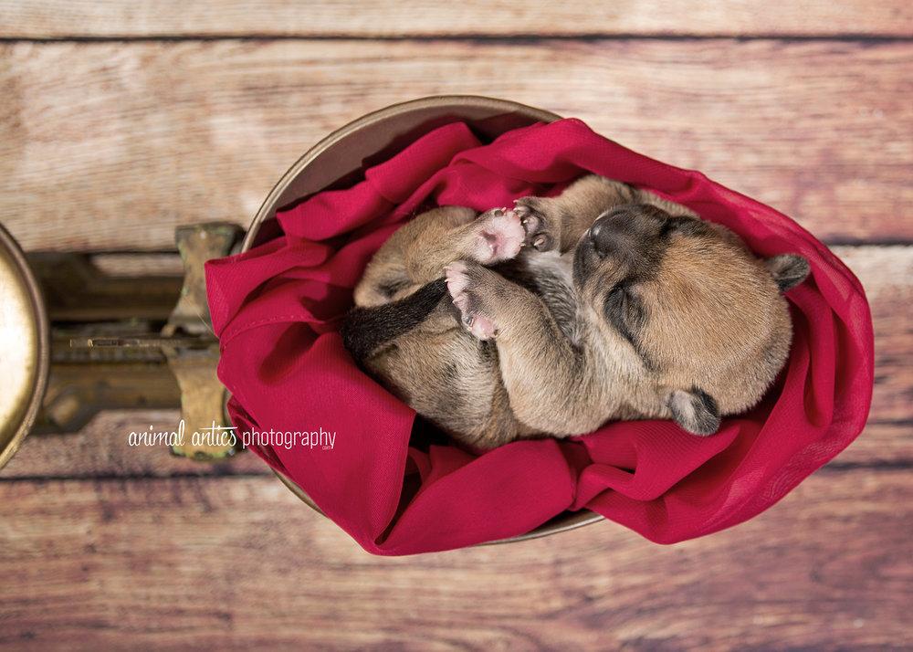 Rosie Pups 019 WEB.jpg