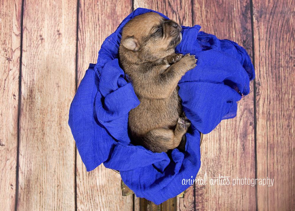 Rosie Pups 020 WEB.jpg