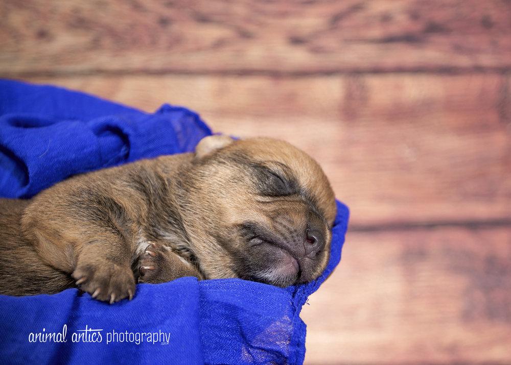 Rosie Pups 021 WEB.jpg