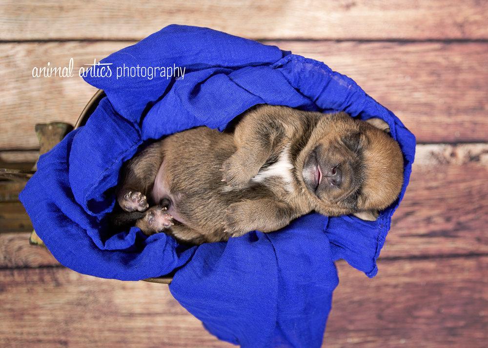 Rosie Pups 023 WEB.jpg
