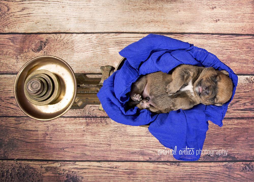Rosie Pups 024 WEB.jpg