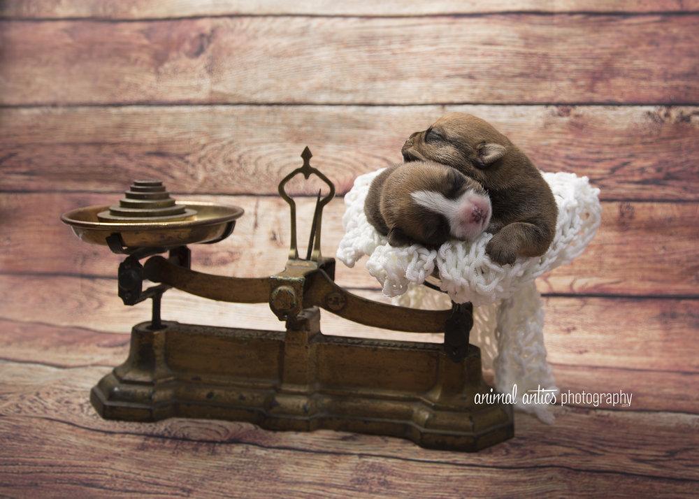 Rosie Pups 027 WEB.jpg