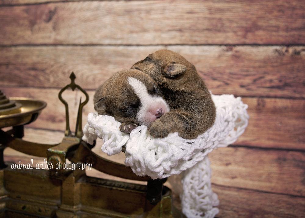 Rosie Pups 029 WEB.jpg
