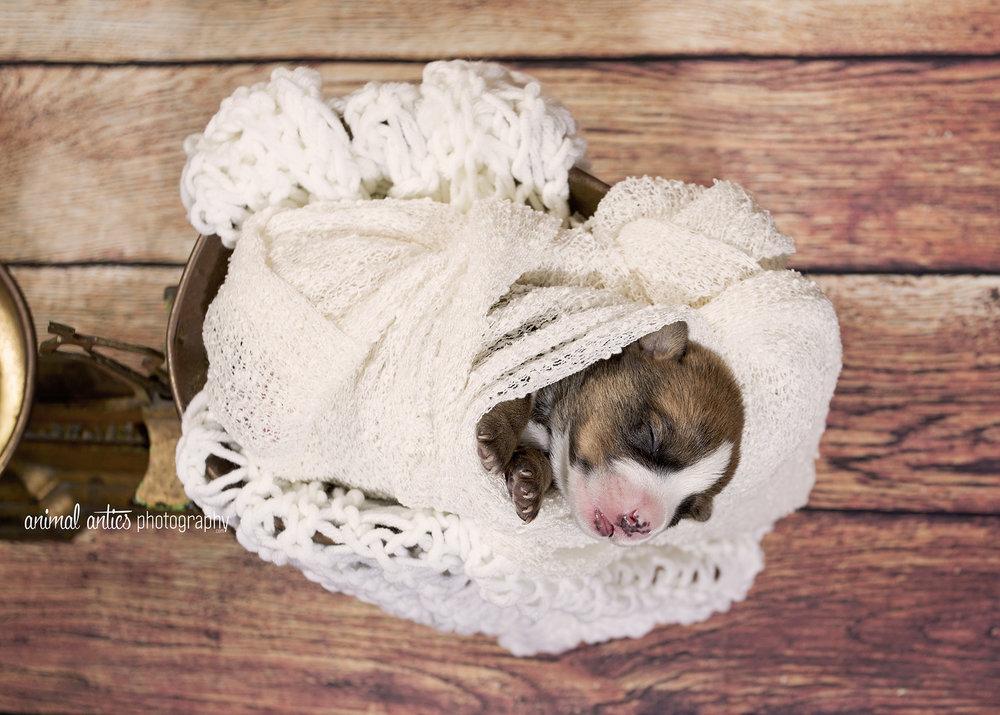 Rosie Pups 030 WEB.jpg