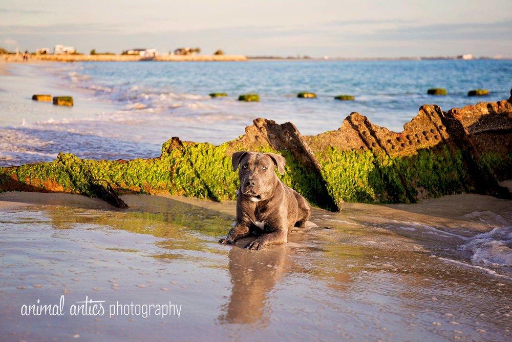 Kooper at CY O'Connor Dog Beach
