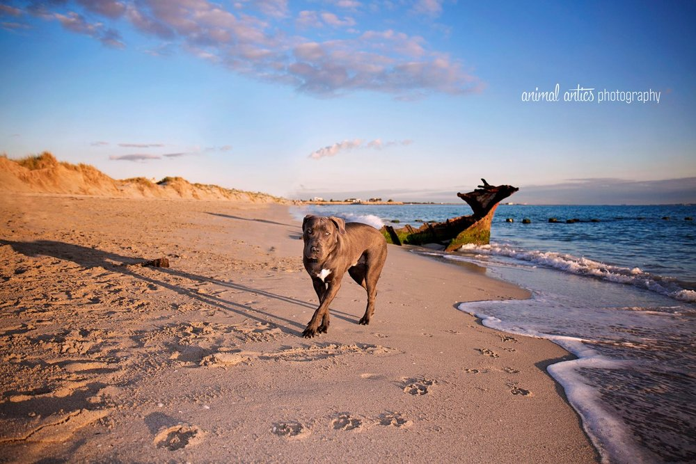 Kooper at South Beach - Dogs in Perth