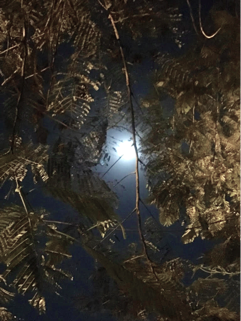 The full moon peaking through the trees reflected by the street lights-