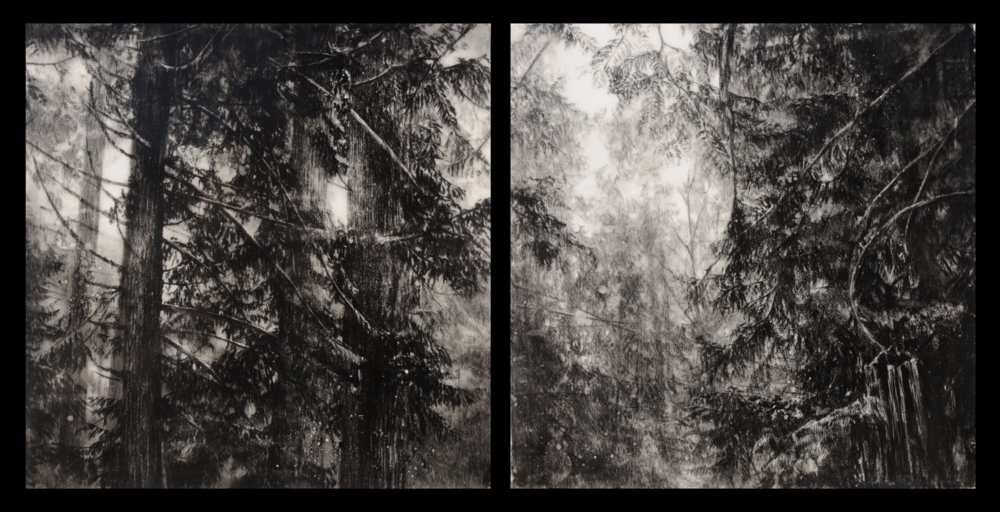Hypatia's Woods II , 2011. Encaustic and charcoal on board. Diptych: two 10 x 10 inch panels.   Available