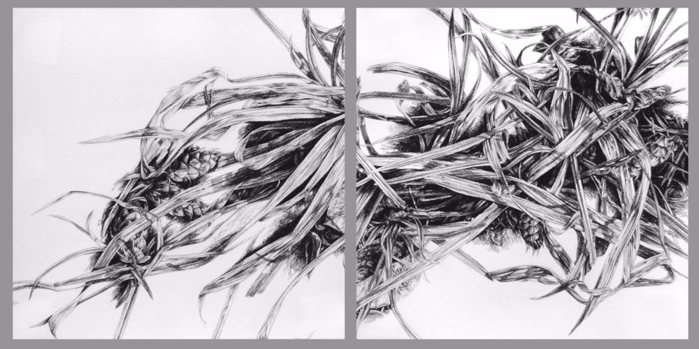 Underfoot , 2011. Charcoal on paper. Diptych: two 9.5 x 9.5 inch panels.   Available