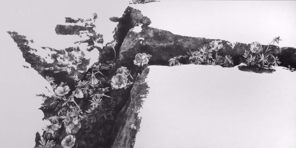 The Fertile Rock III , 2011. Graphite on clayboard. 12 x 24 inches.   Available
