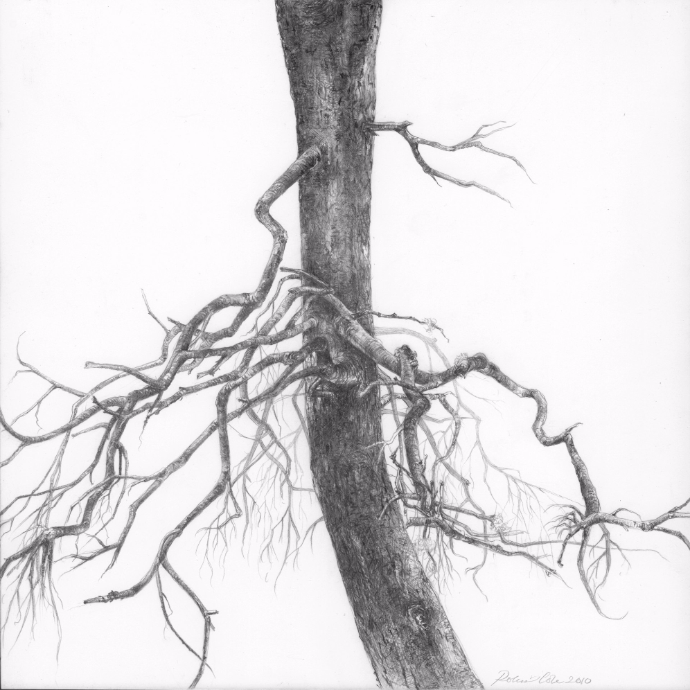 Spruce II , 2010. Graphite on clayboard. 8 x 8 inches. Private collection.