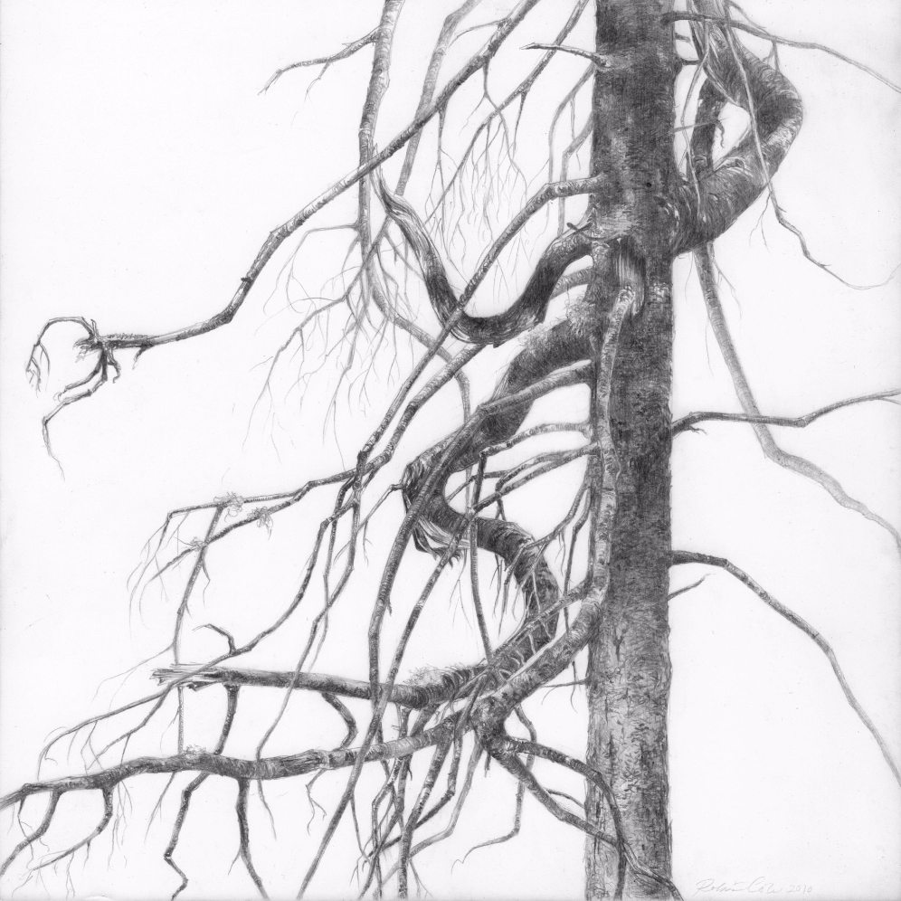Spruce I , 2010. Graphite on clayboard. 8 x 8 inches. Private collection.