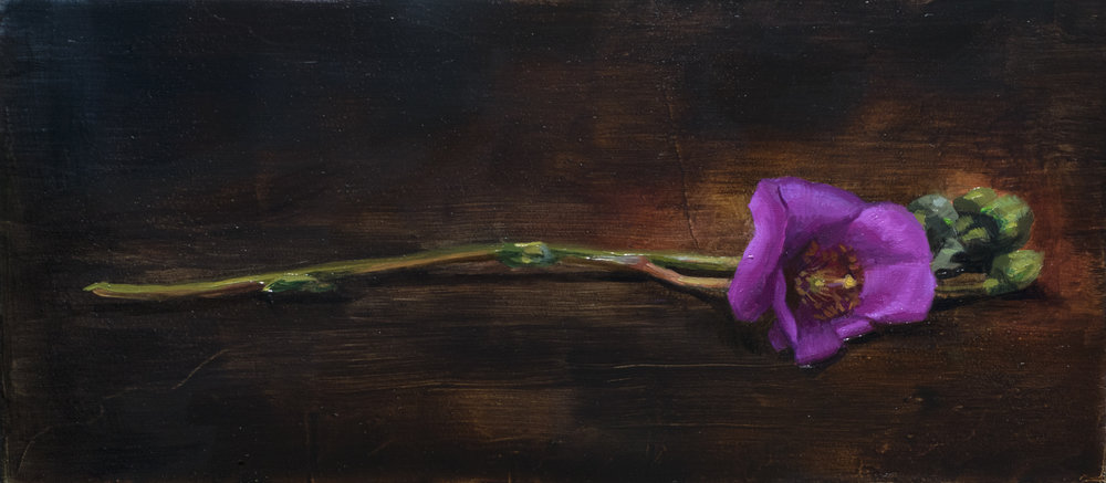 Gentian , 2018. Oil on panel. 3.5 x 8 inches.  Available