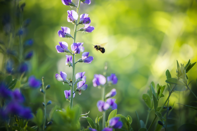 Pollination.  1/400 @ F/2.8  ISO 250