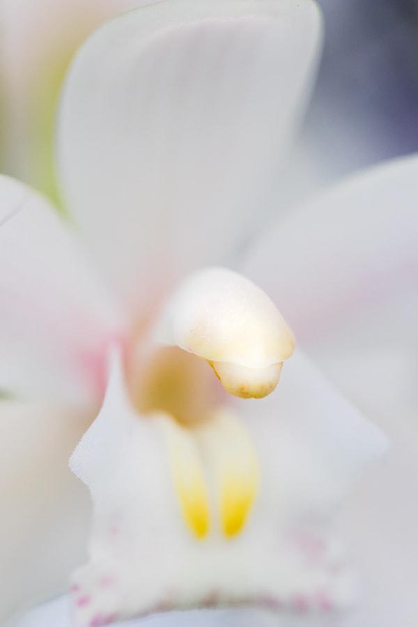 Fine Art Orchid #3