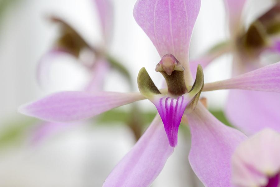 Fine Art Orchid #7