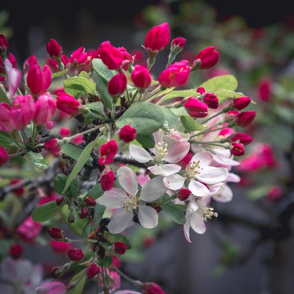 Tea Garden Flowers