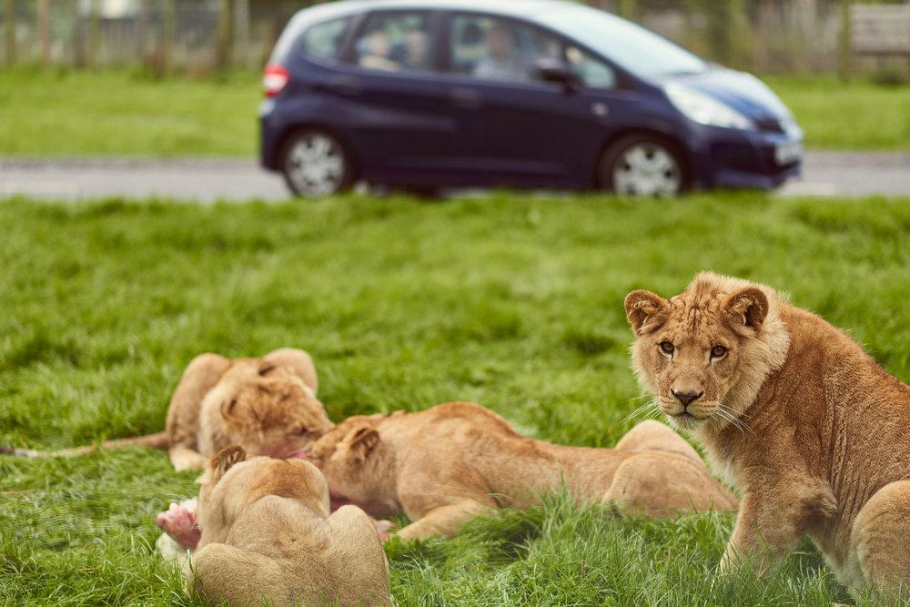 luigidipasquale-safari-13.jpg