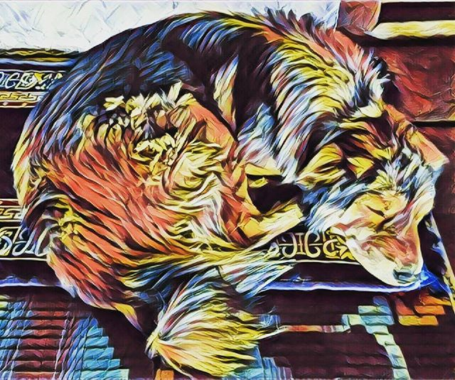 🔀🐶🔀😪🔀 do dogs dream in full colour? 🔀🌃🔀😇 #agameoftones #prisma #xperia