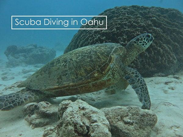 scuba-diving_oahu.jpg