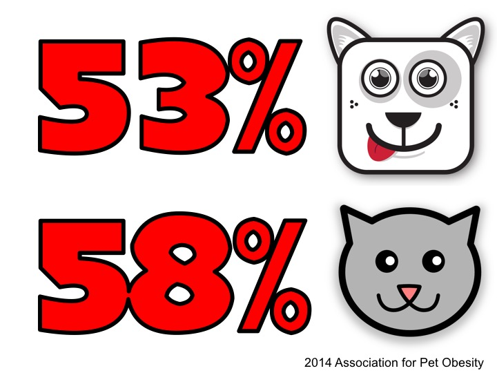 In 2014, 53% of U.S. dogs and 58% of cats were classified as overweight by they veterinarian.
