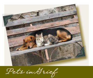 Pets in Grief -