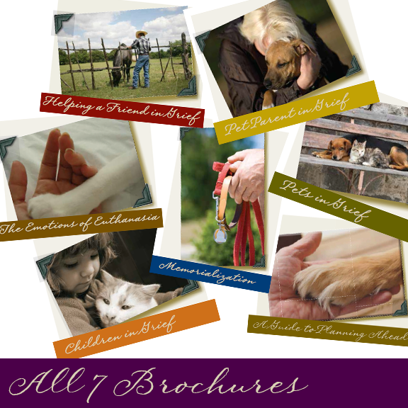 All 7 Brochures -