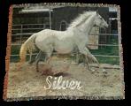 Horse-Blanket.png