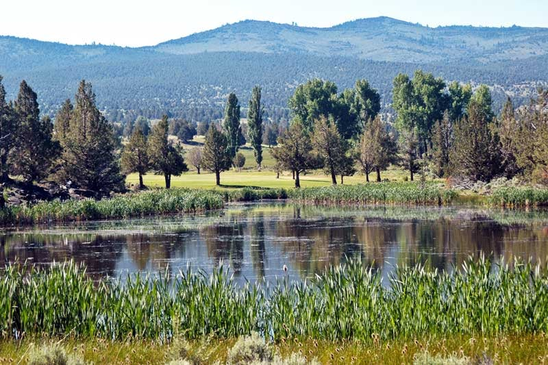 We have several ponds on our 520 acres.