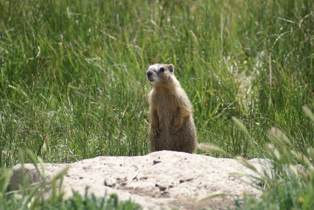 Ground Squirrel.JPG
