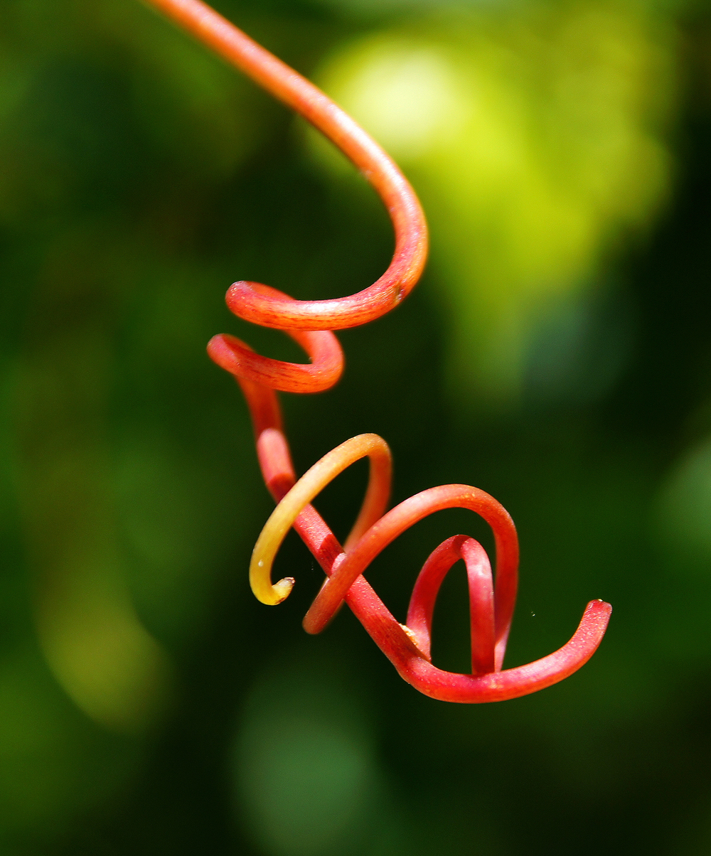 """Tendril"""