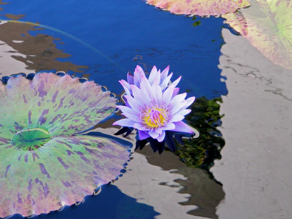 """""""Garden Reflection"""""""