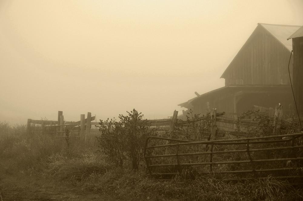 Ezra's Farm