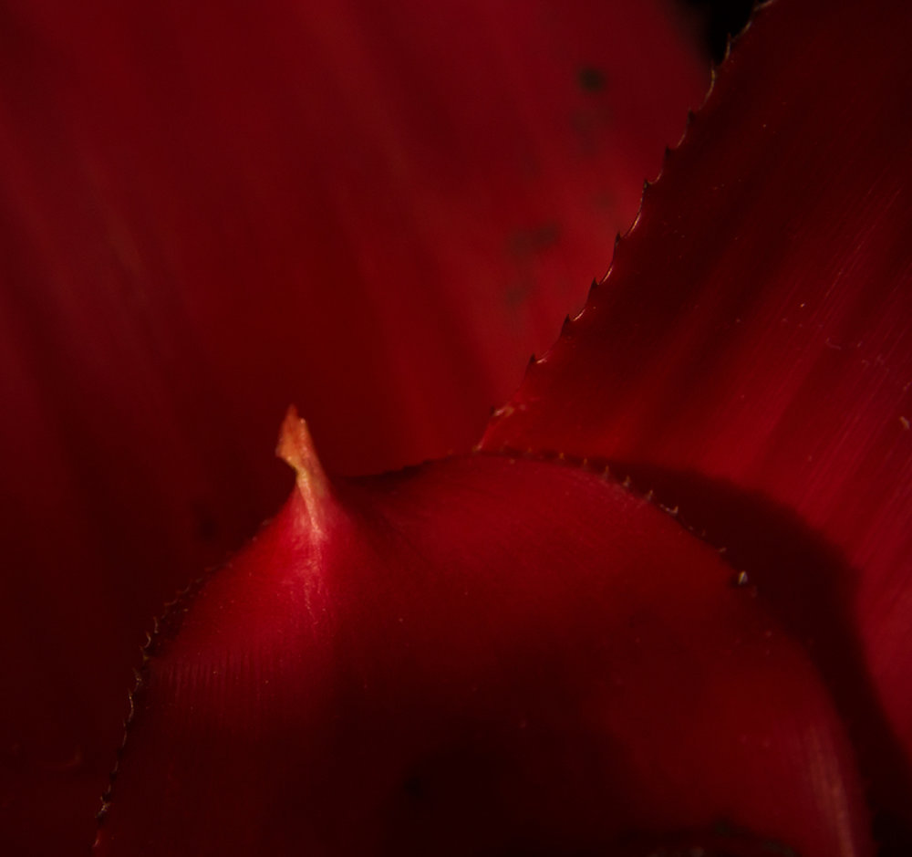 """Botanical Dreams In Red"""