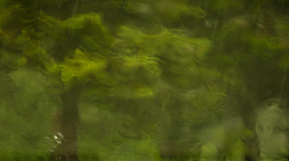 Rainscape