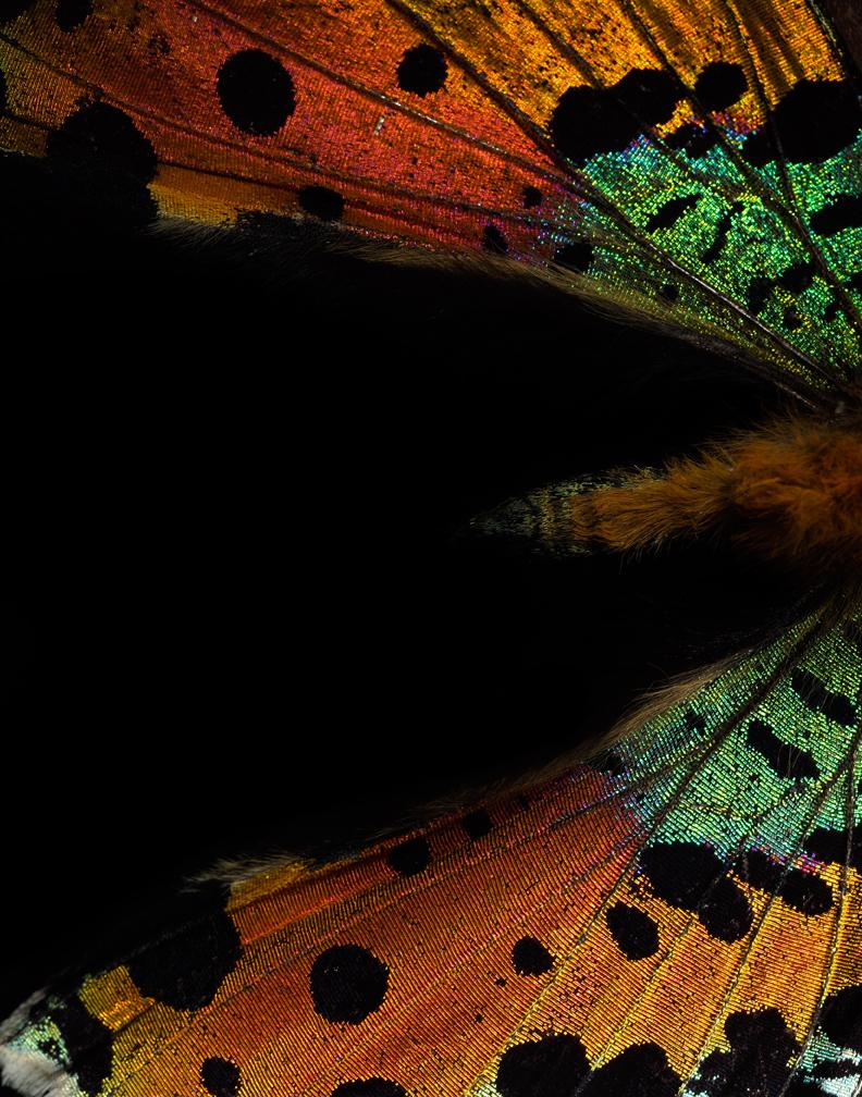 Butterflies 2-17-11 1628a.jpg